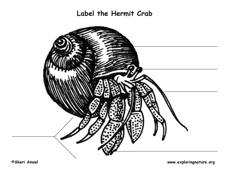 Hermit Crab Labeling Page
