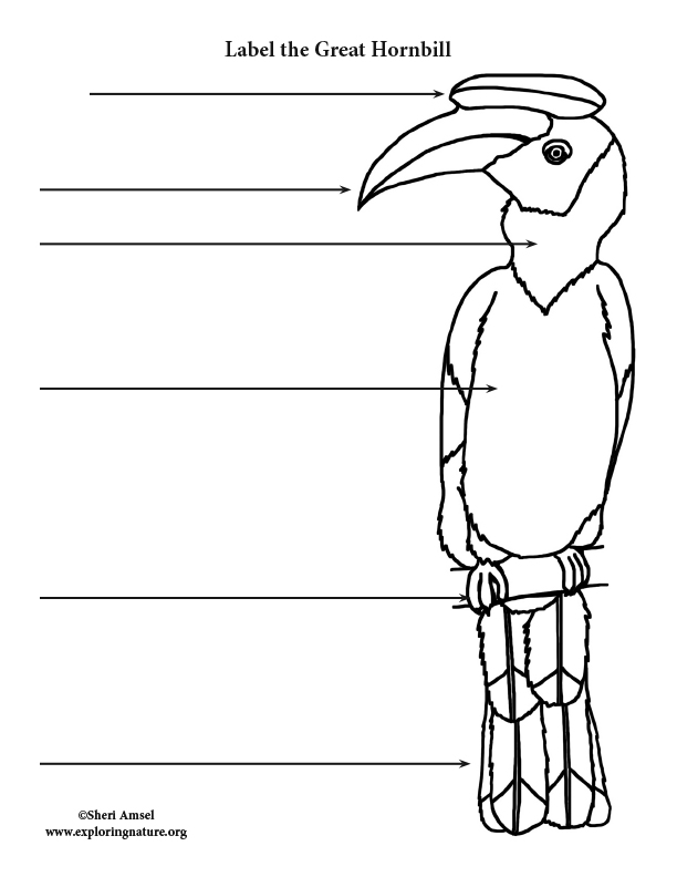 Hornbill (Great) Labeling Page