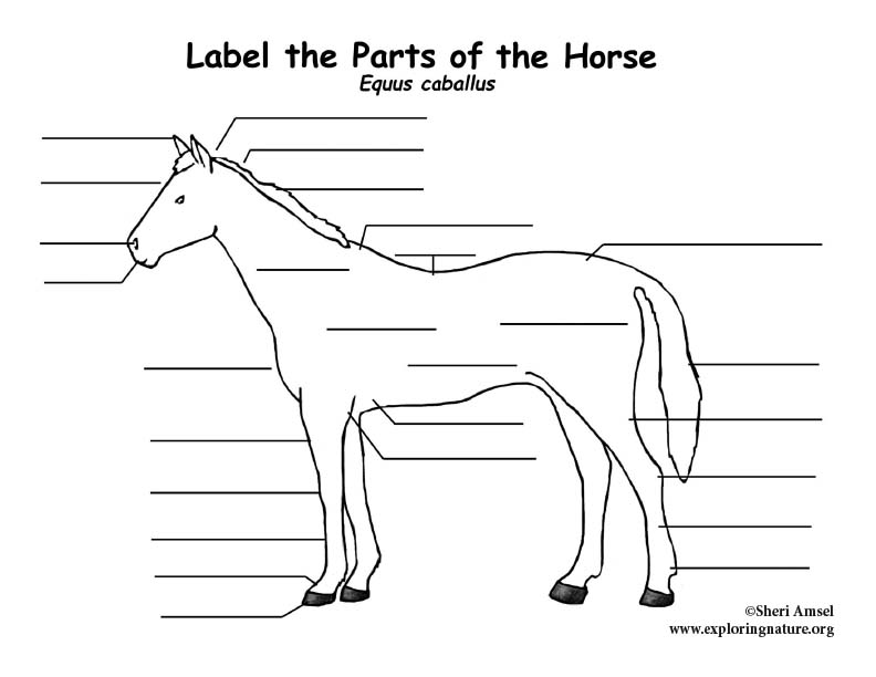 Horse Labeling Page