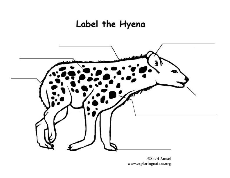 Hyena  Labeling Page
