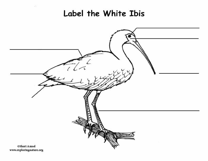 Ibis (White) Labeling Page