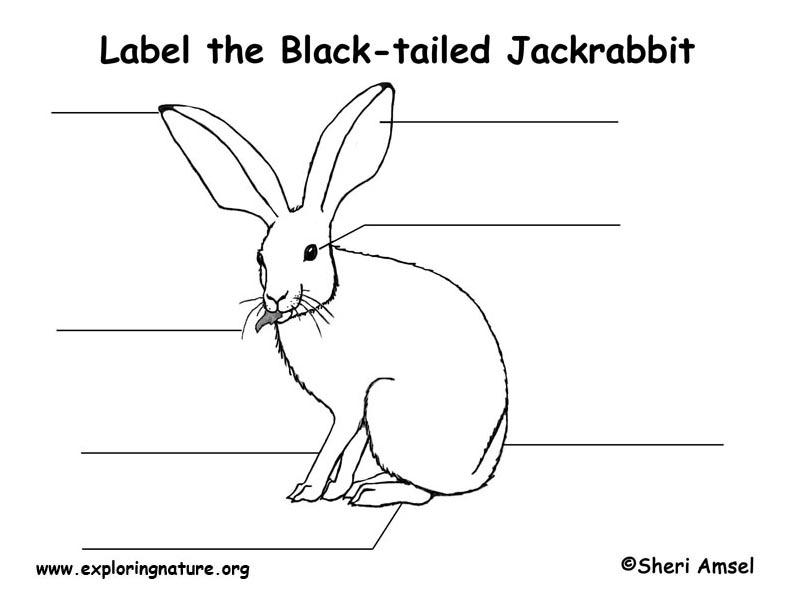 Jackrabbit  Labeling Page