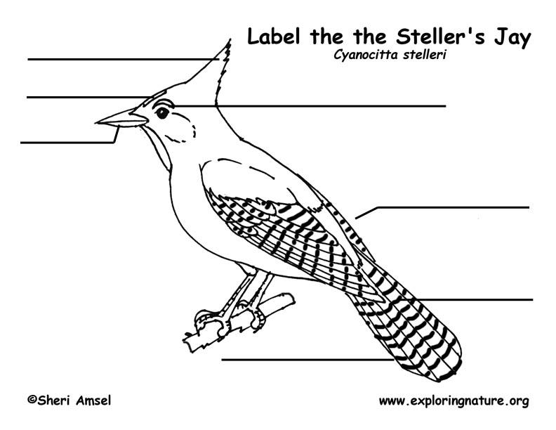 Jay (Stellar) Labeling Page