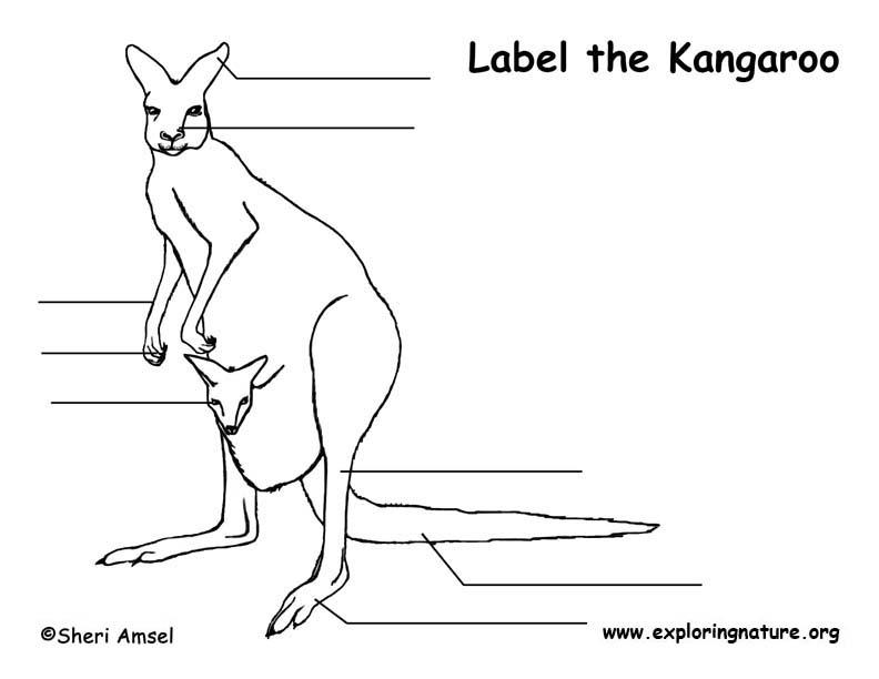 Kangaroo Labeling Page