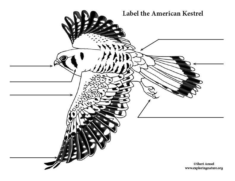 Kestrel Labeling Page