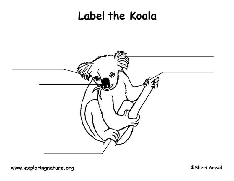 Koala  Labeling Page