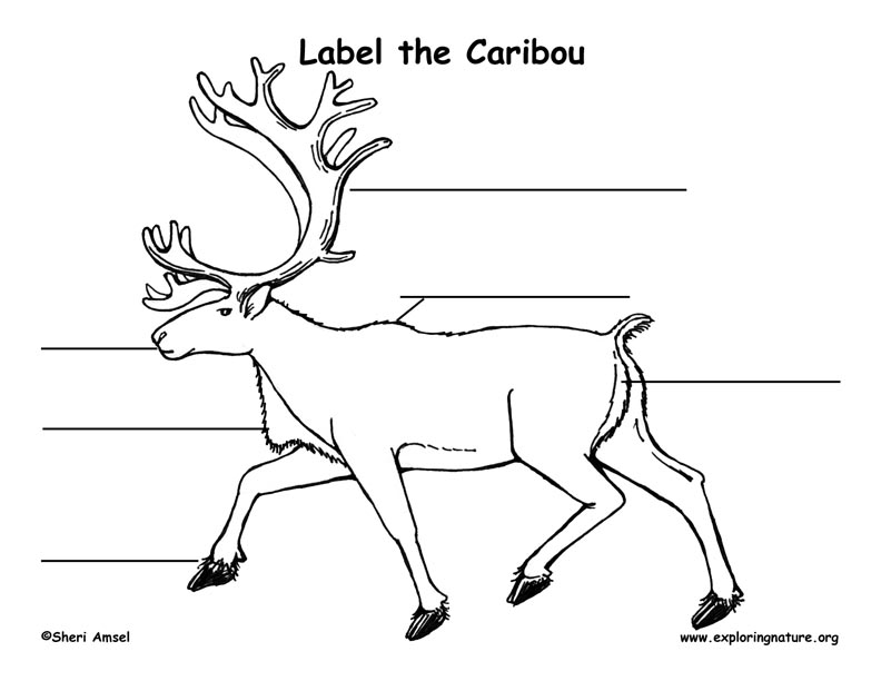 Caribou Labeling Page