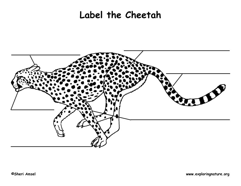 Cheetah Labeling Page
