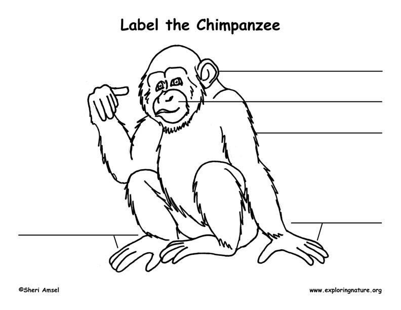 Chimp Labeling Page