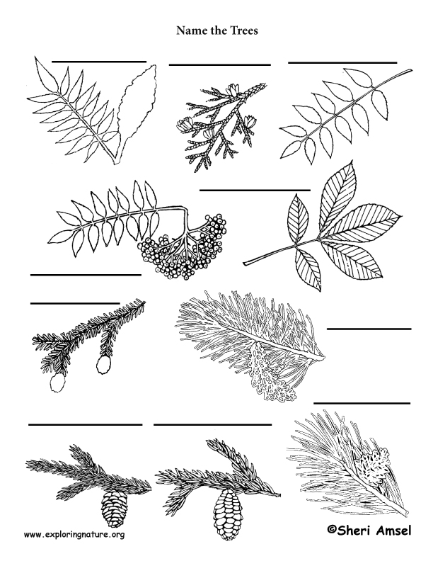 Tree by leaf shape labeling page exploring nature educational