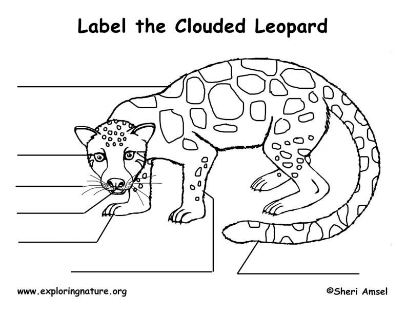 Clouded Leopard Labeling Page