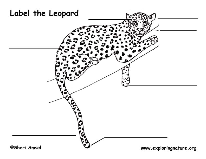 Leopard Labeling Page