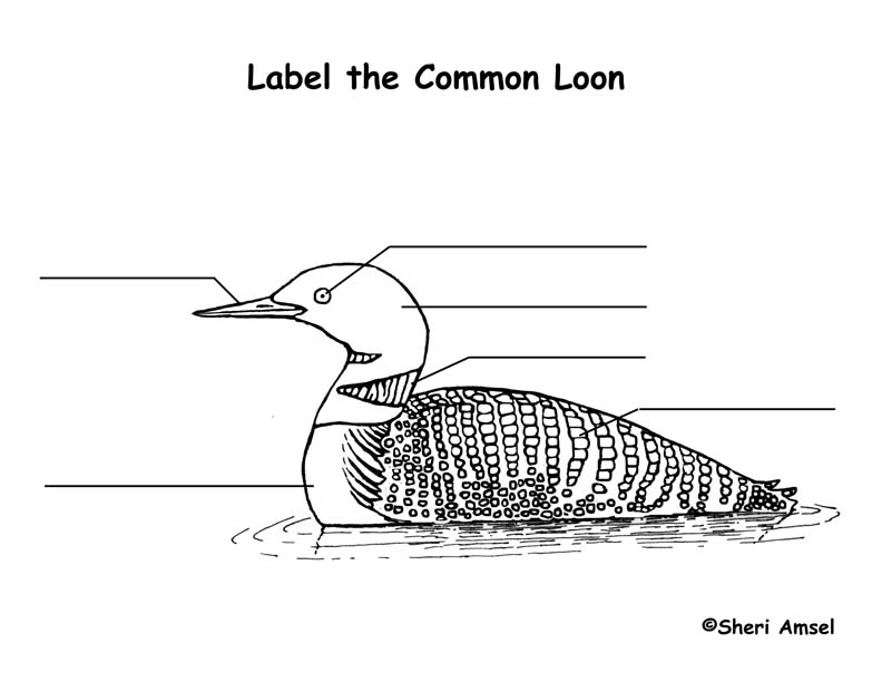 Loon Labeling Page