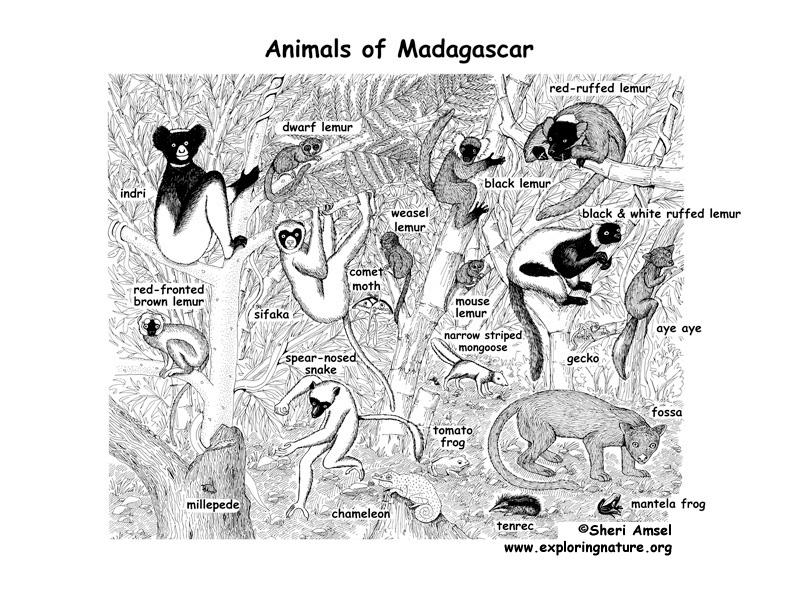 Madagascar Rainforest Animals and Plants