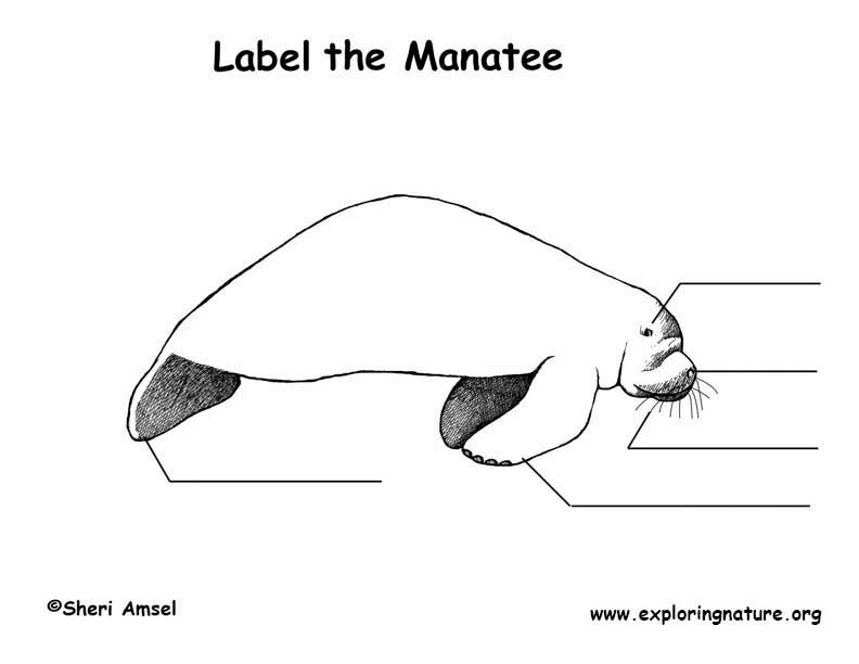 Manatee  Labeling Page