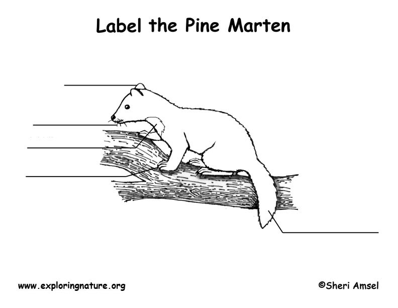 Marten  Labeling Page