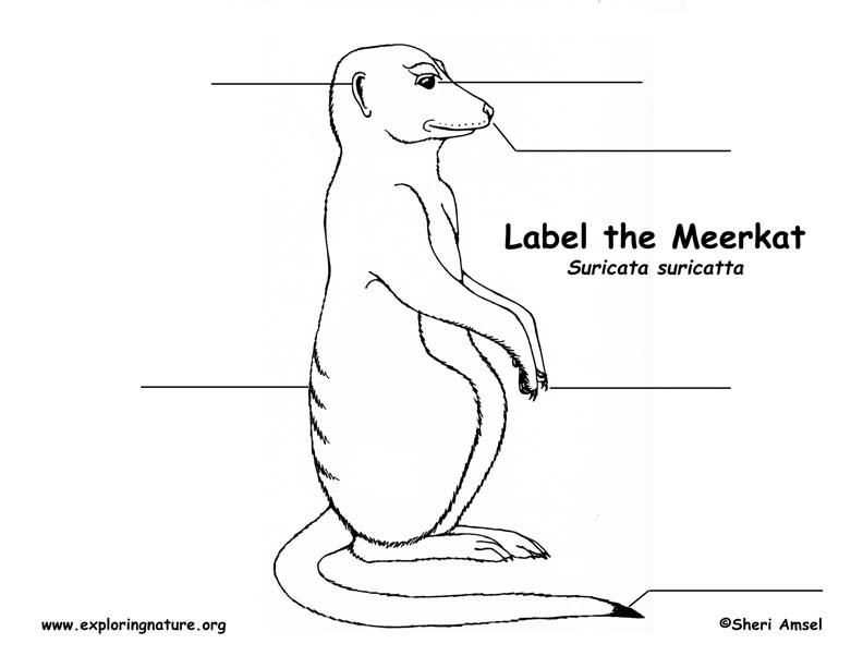 Meerkat Labeling Page
