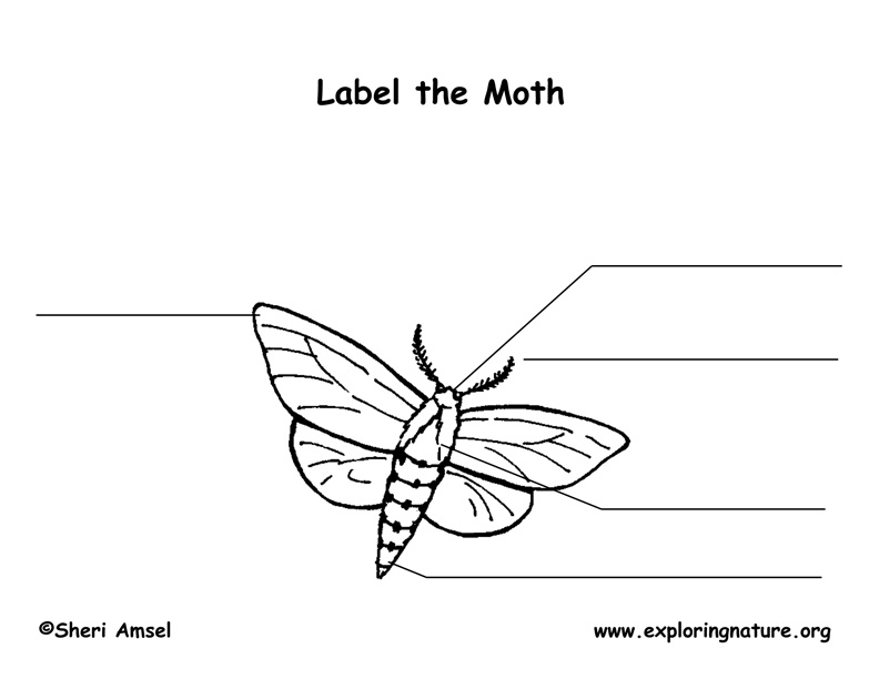 Moth Labeling Page