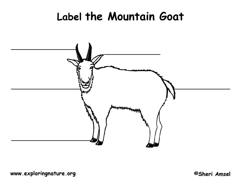 Mountain Goat  Labeling Page