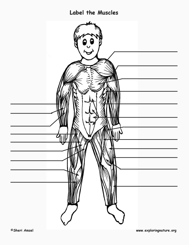 muscle labeling page