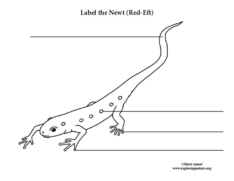 Newt Labeling Page