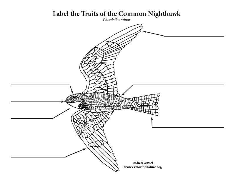 Nighthawk Labeling Page