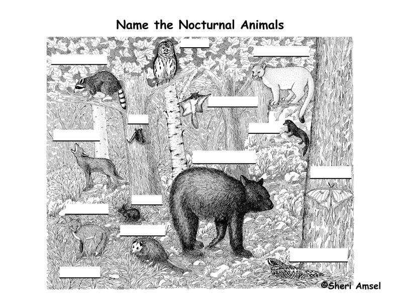 Nocturnal Animals Labeling Page