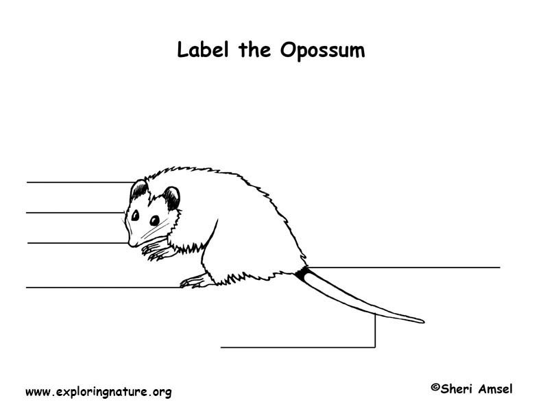 Opossum  Labeling Page