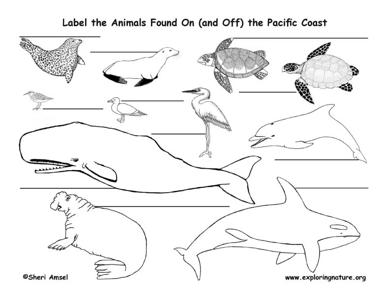Pacific Coast Animals Labeling