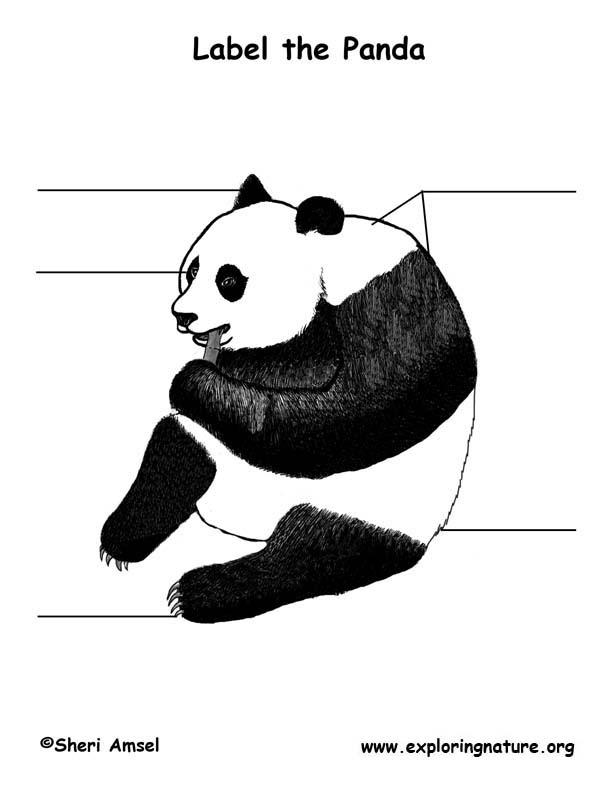 Panda  Labeling Page