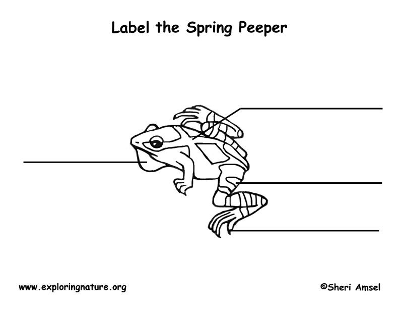 Spring Peeper Labeling Page