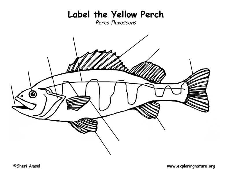 Perch  Yellow  Labeling Page