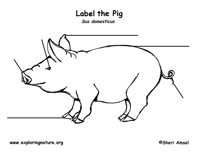 pig labeling page