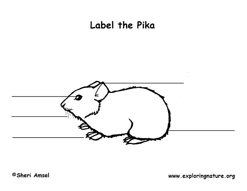 Pika Labeling Page