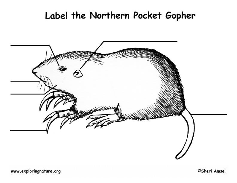 Pocket Gopher Labeling Page
