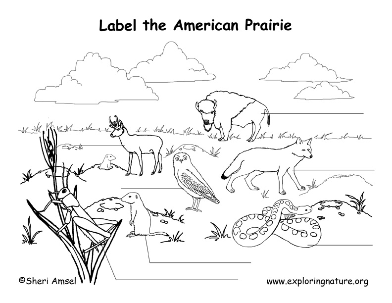 Prairie (American) Labeling Page