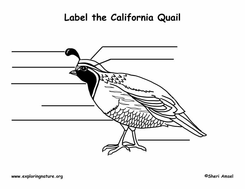 Quail (California) Labeling Page