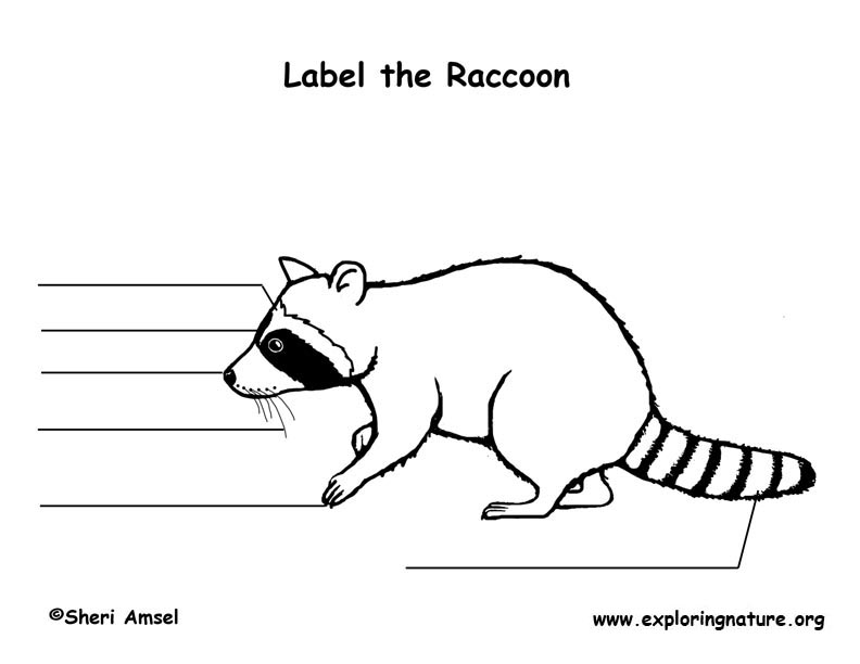 Raccoon Labeling Page
