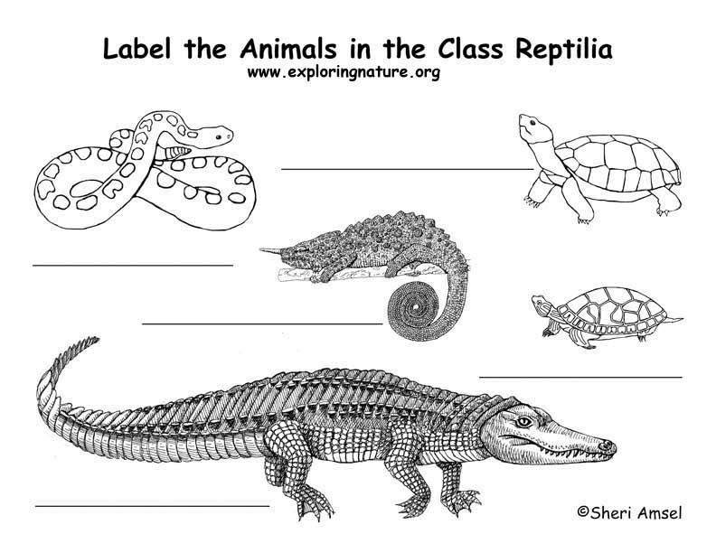 Reptiles Labeling Page