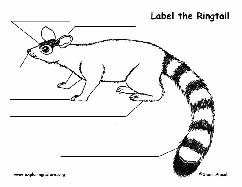 Ringtail Labeling Page