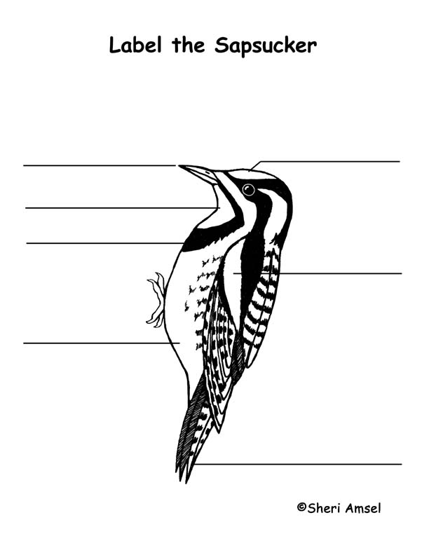 Sapsucker Labeling Page