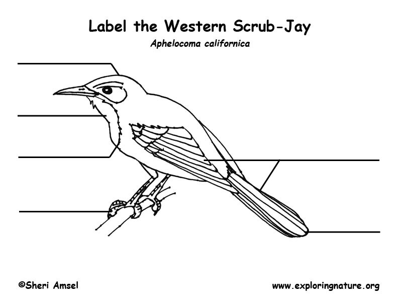 jay  scrub  labeling page