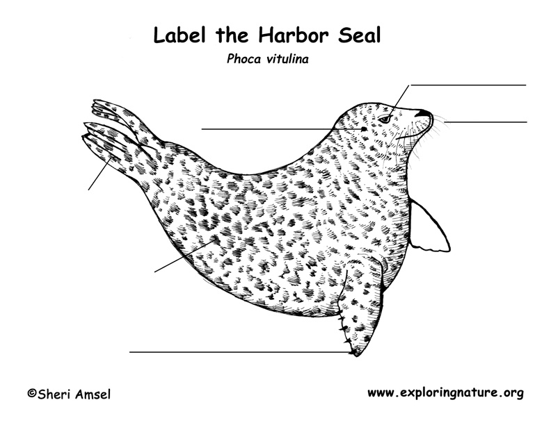 Seal (Harbor) Labeling Page