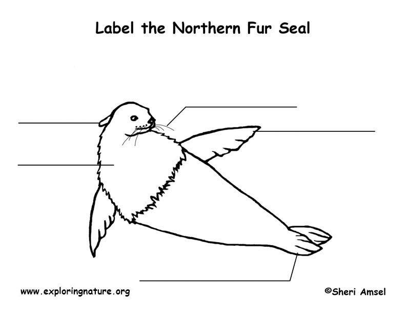 Seal (Northern Fur) Labeling Page