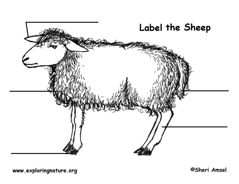 Sheep Labeling Page