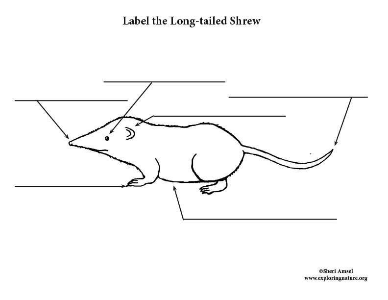 Shrew (Long-tailed) Labeling Page