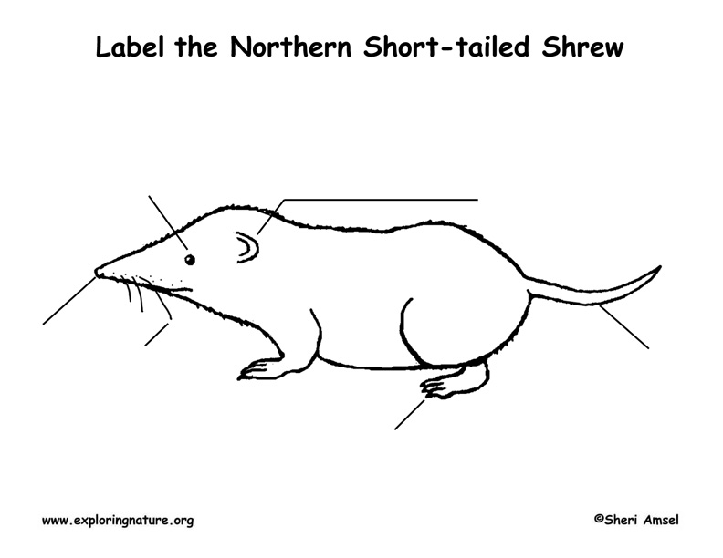 Shrew (Short-tailed) Labeling Page
