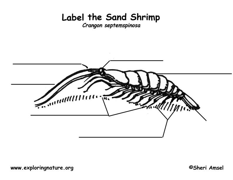 Shrimp Labeling Page