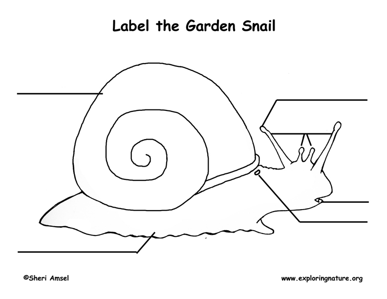 Snail Labeling Page (Younger Students)