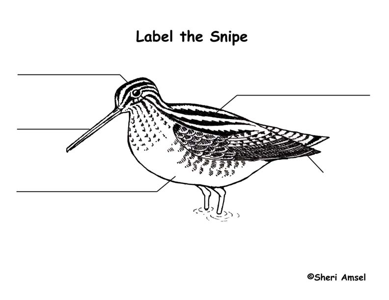 Snipe Labeling Page